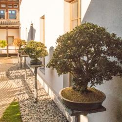 Bonsai - Japanischer Garten - Bad Langensalza