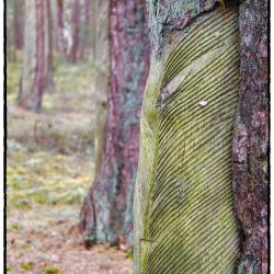 Naturschutzgebiet Darßer Ort