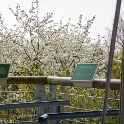 Baumkronenpfad im Hainich