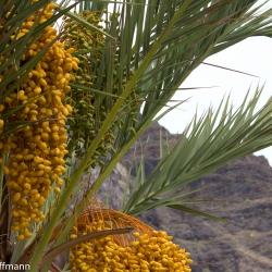 Palmen auf Gomera