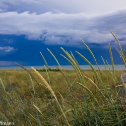 Hiddensee - Gras, Sonne, Wind und Meer