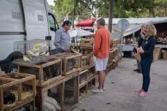 Geflügel - Wochenmarkt Sineu