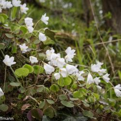 Blumen in der Landgrafenschlucht