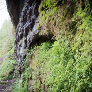 Felswand in der Drachenschlucht